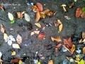 Bear Tracks and Leaves