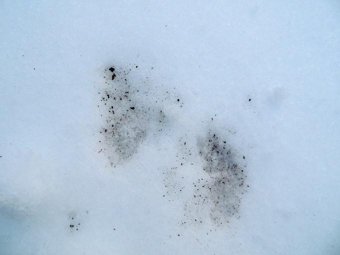 Tracks Spring