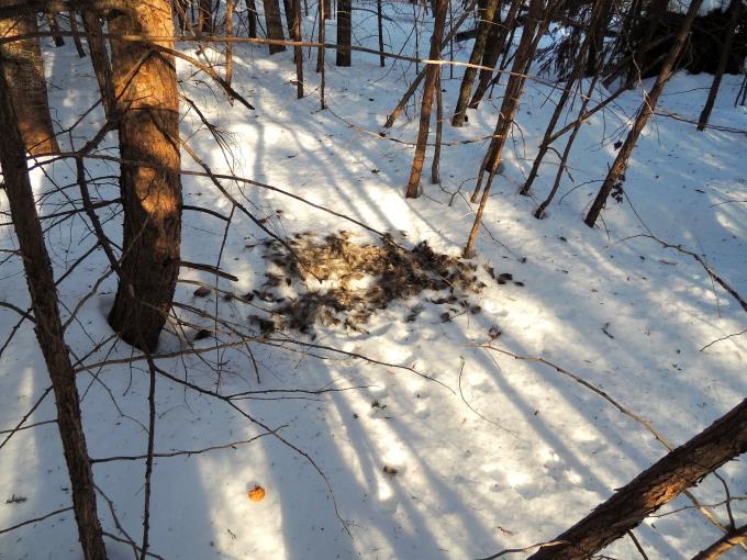 Tracks and deer fur