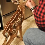 Please Don't Rescue The Fawns