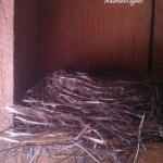 bird nest in shed