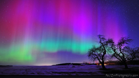Northern Lights Courtesy of Paul Cyr