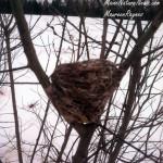 Bird nest in Pussy willow
