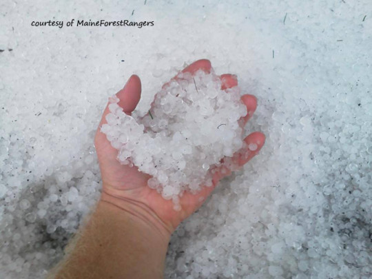 Hail No Aroostook County