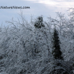 Weekly Notes ~ Winter Sky