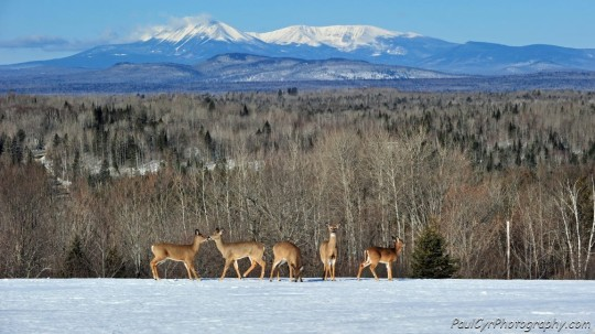 Mount Katahdin and deer