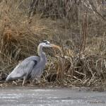 Weekly Notes ~ Bird Language